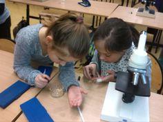 Nasze mikroskopowanie