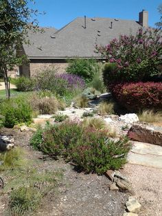 One of our dry creek beds/xeriscape designs that is now fully mature after 3 years.