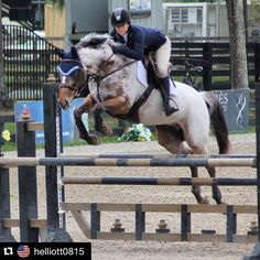 #Repost ~ Tehya & @kuhlowe at Hits Ocala with their @ccfillyfinery bonnet! #fillyfinery #styleyoursteed #equestrianstyle #flybonnet #prettyproductsforprettyponies #hunterjumper ! #HITSOcala