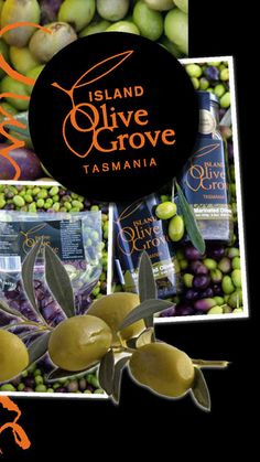 Some interesting facts about olives from Island Olive Grove Tasmania.