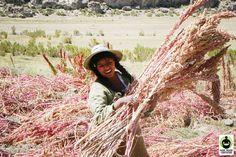 FairTrade Quinoa