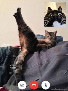 Funny Cat Jokes, Funny Cat Videos, Cat Memes, Funny Cats, Funny Animals, Cute Animals, Pretty Animals, Animal Memes, Funny Cat Photos