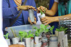 Ecovila em SP tem cursos de bioconstrução, agricultura orgânica e muito mais