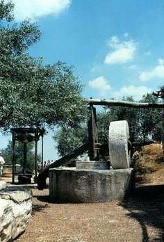 Antigua prensa para obtener aceite de oliva. Israel Olive Press, Israel