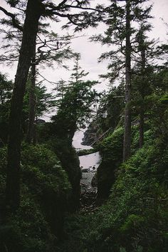 Vancouver Island - by nils via flickr