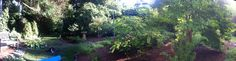 Panoramic view of part of the garden. Summer 2015