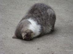 『ごめん寝』登場!ねこあつめ最新ポーズのごめん猫達が可愛すぎる