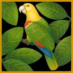 yellowhead-parrot