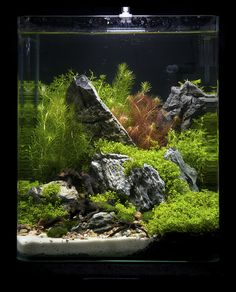 https://flic.kr/p/9fFLD1 | Nano 19 | Nano contestants at the Art of the Planted Aquarium, Hannover 2011