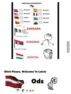 Speaking about language differences Romanian *inhales* ȚÂNȚAR Romanian Language, Different Languages, Funny Memes, Jokes, Gta 5, Hungary, Best Funny Pictures, Fun Facts, Comedy