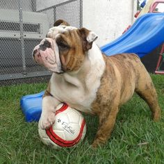 It's Time For World Cup Soccer