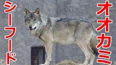 オオカミ シーフード