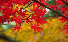 46 Free Fall Wallpapers and Backgrounds: Autumn Landscape by Goodfon