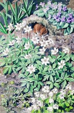 Bank vole in woodland. British Wildlife, Wildlife Art, Botanical Illustration, Illustration Art, Nature Illustrations, Nature Artists, Ladybird Books, Feather Painting, Royal College Of Art