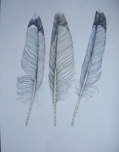 feathers | DRAWINGS FROM NATURE: Three fine feathers