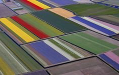 These Dutch Tulip Fields Look Like Test Patterns - Mark Byrnes - The Atlantic Cities