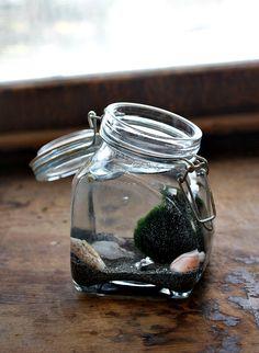 Marimo Moss Ball Water Terrarium- DIY   5 Orange Potatoes