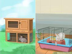 Image titled Raise Rabbits Step 1