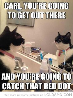 Funny cat memes         The red dot from the lasers to  make them run after it, but they never get it, so I stopped doing it. Its good exercise, but they will never ever get that red dot, its kinda mean.
