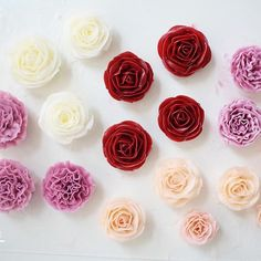 Done by student #카네이션#flower #roses#버터크림플라워케이크#flowecake#cake#flowers#fiore#부케#장미#플라워케이크#플라워케이크클래스#케이크#cupcake#torta#rose#rosa#cooking#baking#pane#dolce#dessert#carnation#delizioso#인계동#꽃스타그램 #꽃#blossom#bouquet#bakingclass