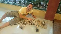 Tiger Kingdom (Tailandia)