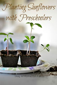Planting and Gardening with Preschoolers - gardening activities for preschoolers are easier than you think, and preschoolers are always such wonderful caretakers, full or pride! Science Activities For Kids, Preschool Science, Spring Activities, Kindergarten Activities, Preschool Activities, Kid Science, Preschool Classroom, Infant Activities, Classroom Ideas