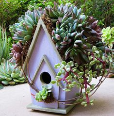 "I adore the succulent roofs, they're easy to plant. My Secret, just for friends following my Succulent Nook board: I cover the roof with a ""sausage"" of sphagnum moss. The moss is stuffed in a nylon mesh ""sock"" that I glue to the roof with oasis glue. Plant the succulents with very short stems and pin with floral pins, they'll root in a week or two."