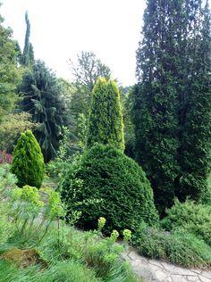 Trees at Fletcher Moss Gardens, Manchester.