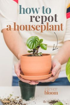 Are your houseplants in need of repotting? Visit Clever Bloom to learn how to repot your plants the right way! Informations About How to Repot a Houseplant - Clever Bloom Pin Y Flowering House Plants, House Plants Decor, Plant Decor, Hanging Plants, Indoor Plants, Indoor Gardening, Air Plants, Cactus Plants, Planting Succulents