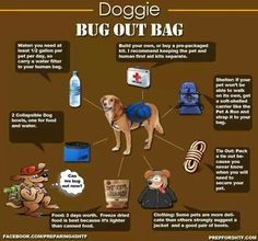 Doggy bug out bag