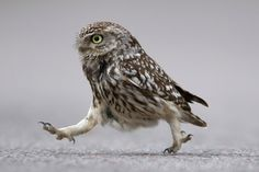Little Owl wants to walk