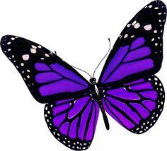 Imagen PNG mariposa púrpura