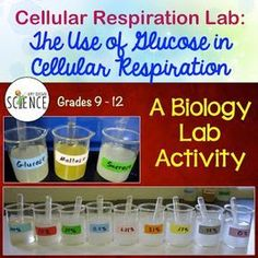 http://www.amybrownscience.com/2012/03/lab-use-of-glucose-in-cellular.html