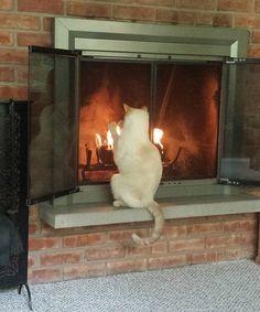 Kedidir ne yapsa yeridir sonuçta değil mi? Şimdi paylaşacağımız fotoğrafları görünce de ne demek istediğimizi eminim daha iyi anlayacaksınız :)