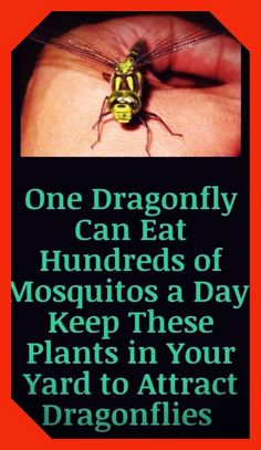 Dragonfly Larvae, Diy Beauty, Beauty Hacks, Wolf Tattoos Men, Mosquito Larvae, 7 Places, Muscle Nutrition, Triceps Workout, Body Hacks