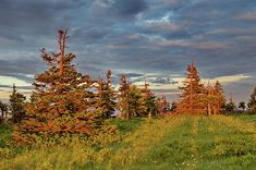 Sunset on the mountain meadow by Ren Kuljovska Photo Tree, Photos For Sale, Got Print, Stretched Canvas Prints, Your Image, Travel Photos, Fine Art America, Canvas Art, Fine Art Prints