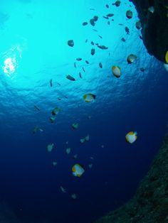 Diving at Yoron Island 与論島
