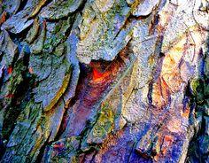 Ecorce d'arbre multicolore   Flickr: partage de photos!