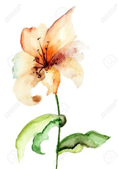 Picture of Yellow Lily flower, watercolor illustration stock photo, images and stock photography. Calla Lily Tattoos, Tiger Lily Tattoos, Flower Tattoos, Ribbon Tattoos, Butterfly Tattoos, Lilies Drawing, Painting & Drawing, Watercolor Paintings, Watercolor Tiger