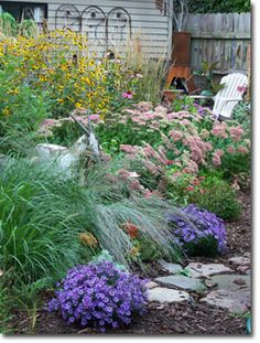 Purple perennial asters pop in the fall border