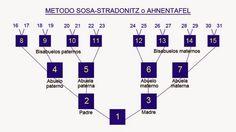 Historia y Genealogía Sudamericana: ¿Que es el implexo?