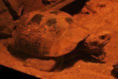 30 Batu Caves, Turtle, Animals, Turtles, Animales, Animaux, Tortoise, Animal, Animais