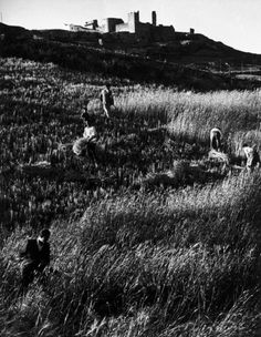 """W. Eugene Smith SPAIN. Extremadura. Province of Caceres. Deleitosa. 1951. Harvesting wheat. From """"Spanish Village"""" photo-essay."""
