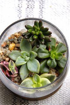 Tilly's Nest: Tiny Terrarium Place Settings