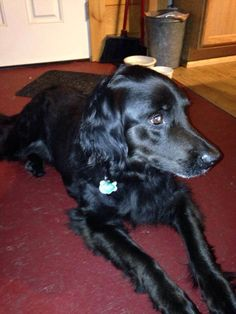 #Founddog 7-12-14 #Sharon #VT Howe Hill Black Male Collar & tags, number illegible 513-368-8049 https://m.facebook.com/story.php?story_fbid=584176958366226&substory_index=0&id=198608766923049