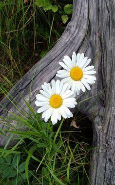 """""""Se pudéssemos ver o milagre de uma única flor claramente, toda a nossa vida mudaria."""" ~Buddha~"""