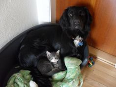 This kitten who's not afraid to love another species. | 31 Times Cats Were Good People