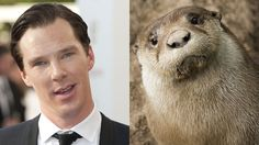 Sure, this otter may vaguely resemble actor Benedict Cumberbatch.