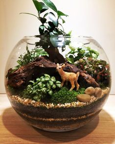 21 Best Animal Figurines Terrariums Images Terrarium Succulent