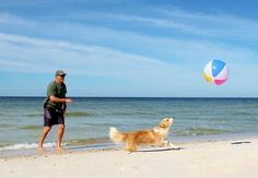 Need a break from winter?  Your dog probably does too!  No crowds, white sand between your toes....doesn't get much better than that!  www.TheCapeEscape.com